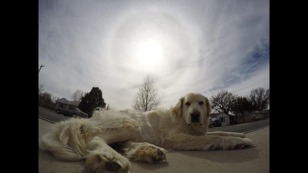 Great Pyrenees Do Not Consent To Geoengineering And Remember What The Sky Use To Look Like