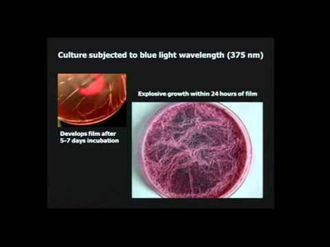 Chemtrails,SA Geoengineering,Morgellons. The Dark Agenda of Synthetic Biology.Full Power point