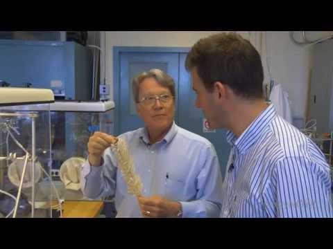 Geoengineering Carbon