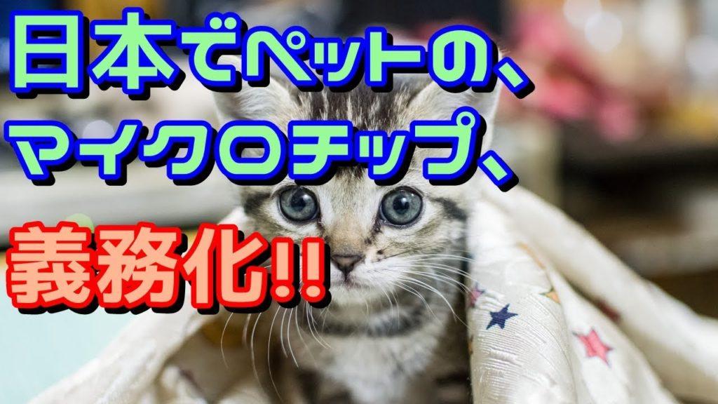 都市伝説・やりすぎ・猫・犬・ペット・夏・2018・7月・放送・最新・子猫・人口削減・第7感・予言・人間選別・Qanon