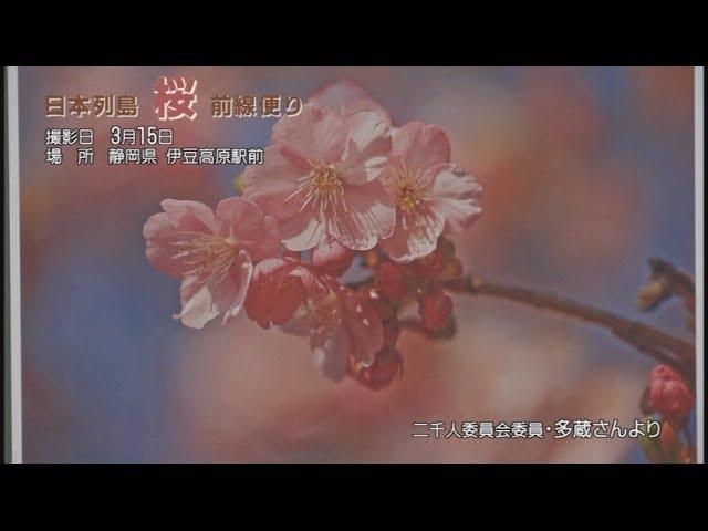 【桜前線】神奈川、静岡、東京の桜[桜H26/3/25]